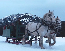Winter Activities: Ski, Sleigh, & Snowcoach