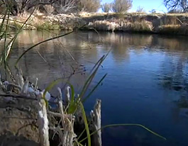 Amargosa Springs Wildlife Refuge